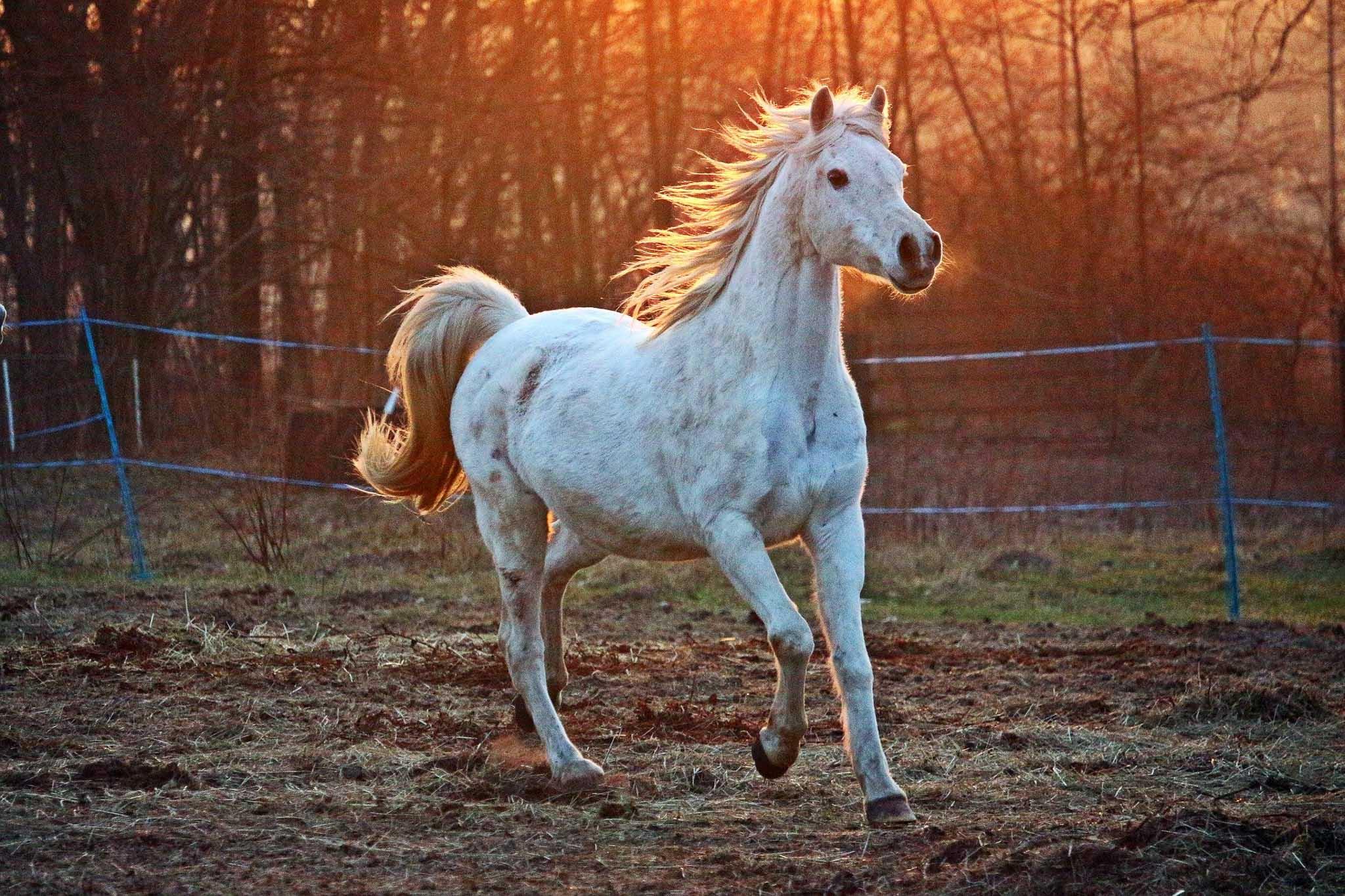 Pferde Fotoshooting
